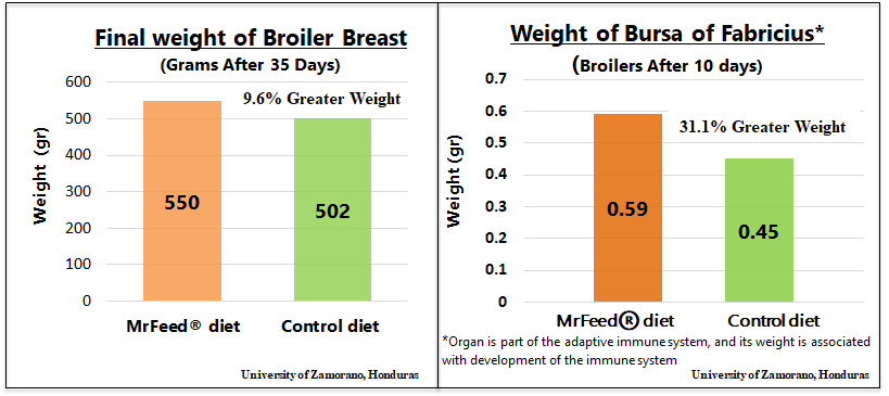 Final Weight of Broiler Breast and Bursa of Fabricius